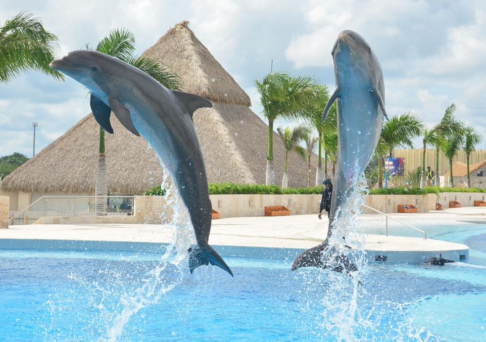 Swimming with the dolphins Bavaro Beach