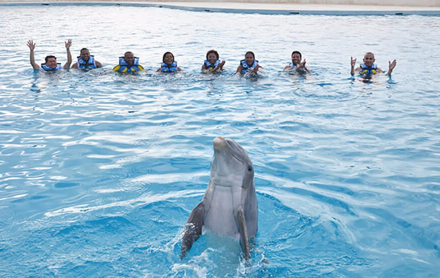 dolphin programs in Punta Cana DR